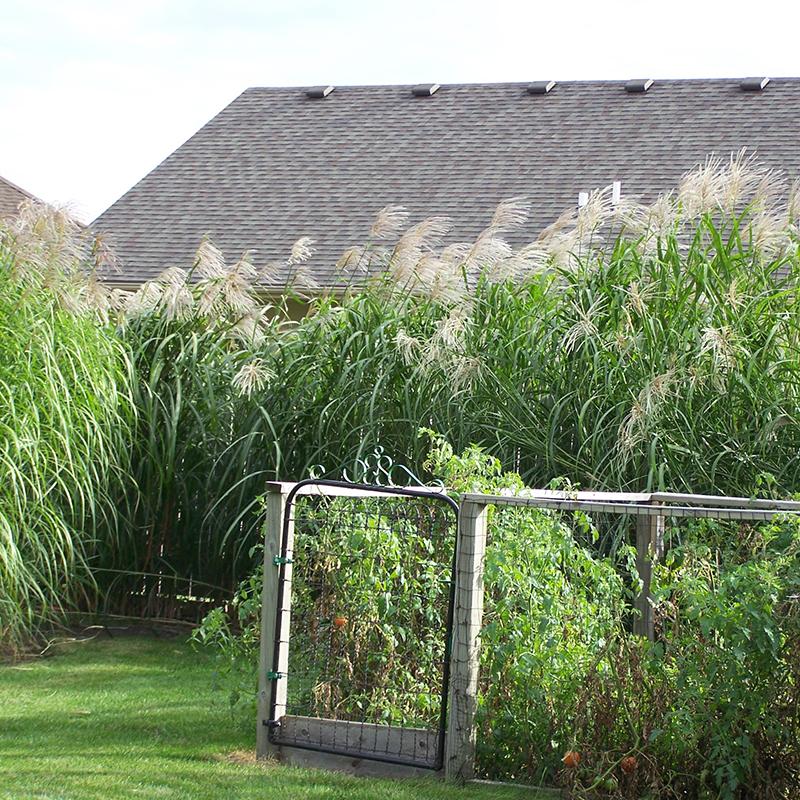 square_grasses_fence