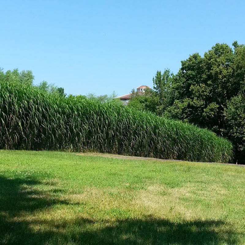 square_grasses_lawn