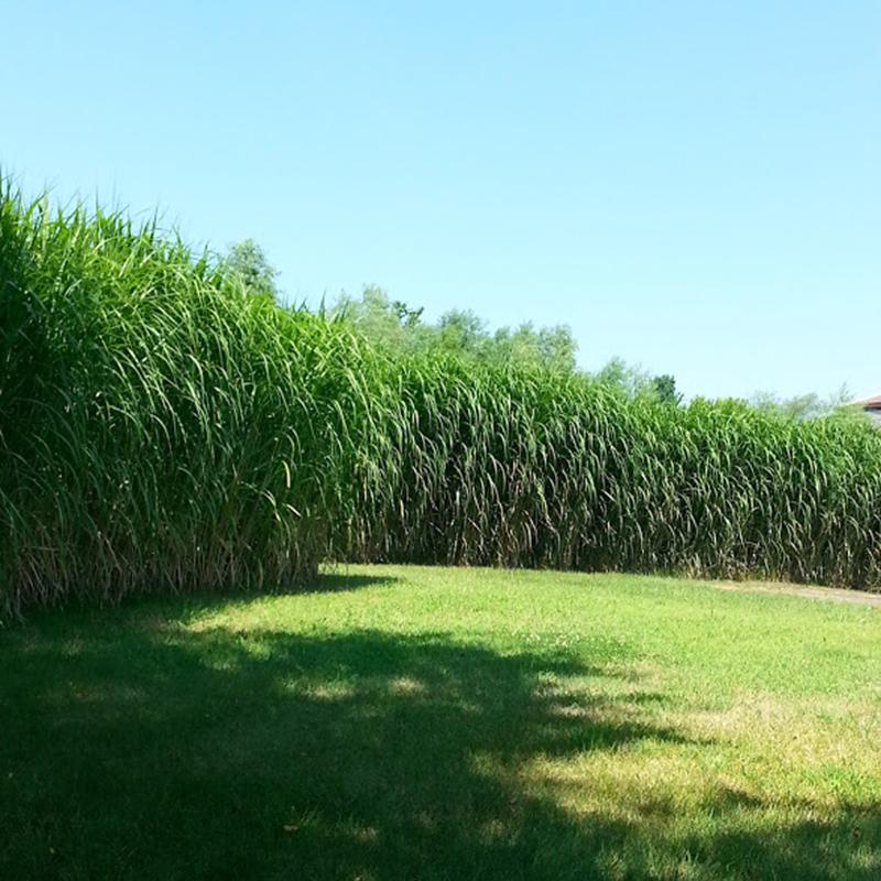 square_grasses_lawn_sun
