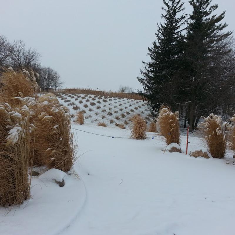 square_grasses_snow