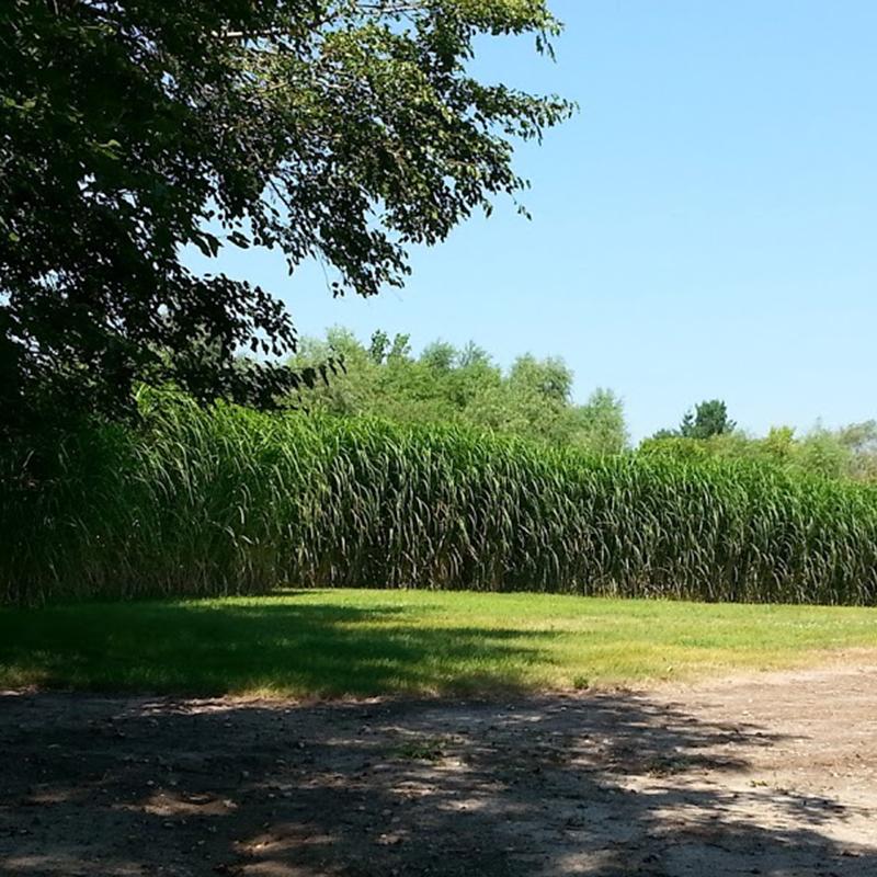 square_grasses_tree