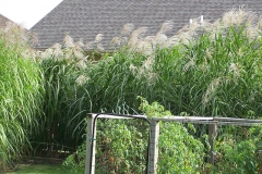 square_grasses_fence