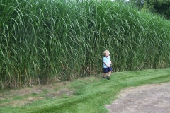 square_grasses_kid
