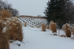 square_grasses_snow
