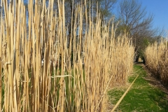 square_grasses_winter